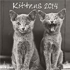 calendario 2014 kittens 30x30cm-9783832762070