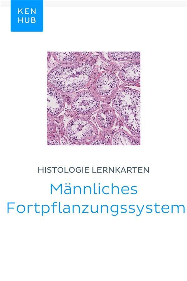 HISTOLOGIE LERNKARTEN: MÄNNLICHES FORTPFLANZUNGSSYSTEM EBOOK ...
