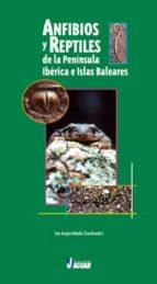 anfibios y reptiles de la peninsula iberica e islas baleare toni aragon rebollo 9788496423336